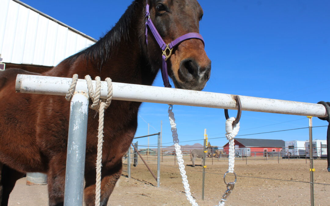 Make a Quick Release for Horses